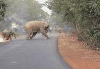 قصة اصحاب الفيل للاطفال مكتوبة كاملة