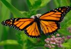 قصة الفراشة الجميلة والرائعة للاطفال