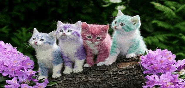 لعنة الشهية المفتوحة - آكل لحوم القطط