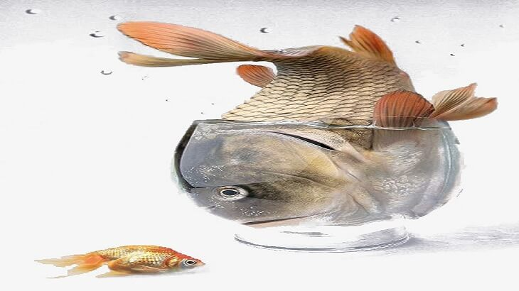 السمكة المسجونة و الحمام