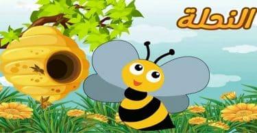 قصة الفراشة والنحلة مسلية جداً للصغار