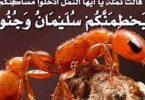 قصة سيدنا سليمان عليه السلام مع النمل
